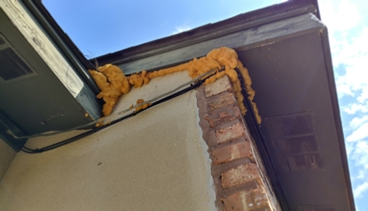 horrifying bat removal repair work right side - click for a full size picture