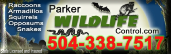Parker Wildlife Control - Gets bats out!