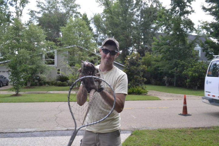 Netted an armadillo